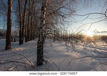 Winter Landscape At Dawn With Footprints In The Snow