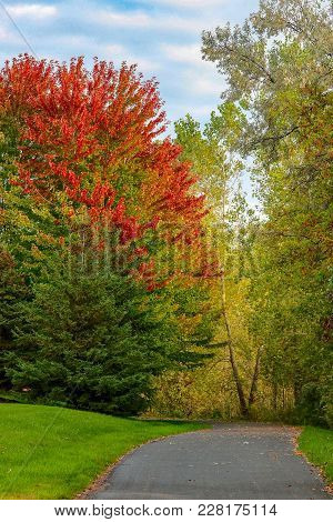 Colorful Trees In Autumn Lined Along A Paved Park Trail With Green Grass Growing As Summer Turns To