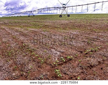 A Bean Field In Brazil Is Watered By A Center Pivot Irrigation System