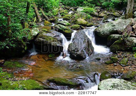 Lower York Creek