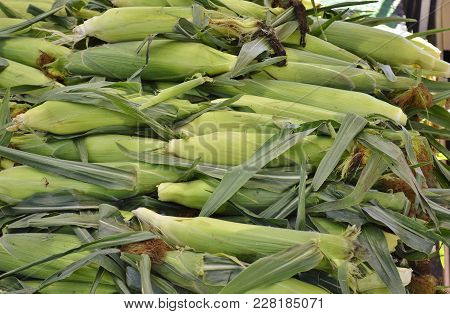 Corn-on-the-cob Displayed And For Sale At A Local Farmers Food Market