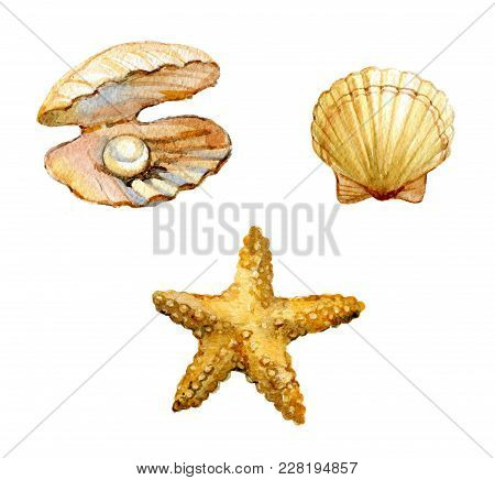 Set Of Sea Shells, Starfish, Shell With A Pearl Isolated On White Background, Watercolor Illustratio
