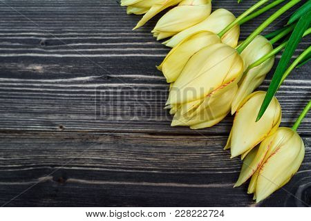 Spring Background With Bunch Of Tulip Flowers, Copy Space. Yellow Tulips On Wooden Background. Flat