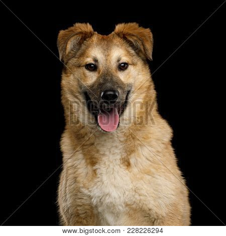 Closeup Portrait Of Cute Mongrel Dog Happy Looking In Camera, Isolated On Black Background