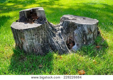 Old Tree Stump On A Background Of Green Grass In A Summer Park.