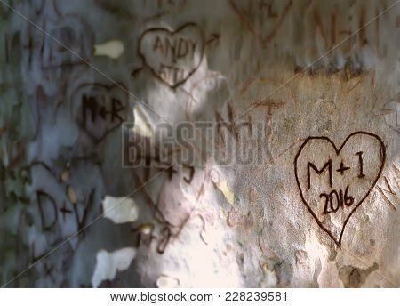 Hearts With Letters And Initials Of People In Love Engraved Carved On A Tree Trunk, Romantic Image,