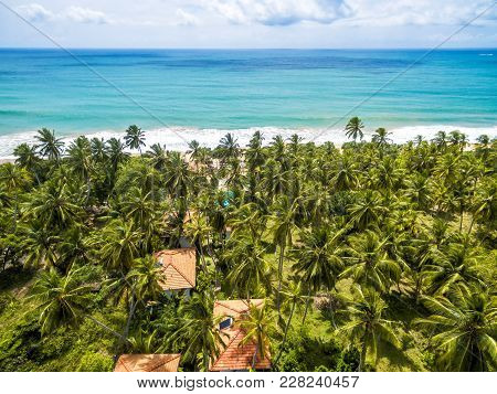 Aerial View Of The Scenic Beach With Palms In Sri Lanka. Travel Destinations In Tropic. Sunny Natura