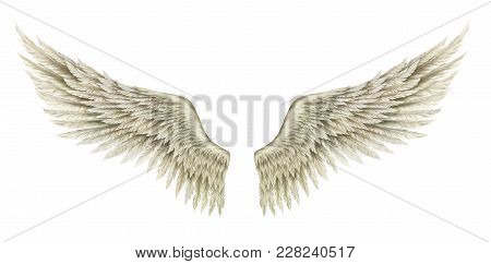 White Hand-drawn Wings Of Angel Or Archangel, Element Of Insignia Or Coat Of Arms.
