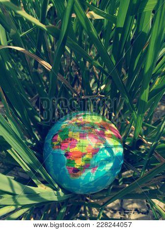 Globe ball on wild grass
