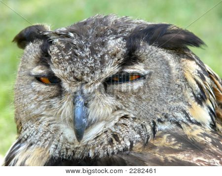 A mean looking owl squinting his eyes poster