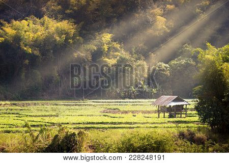 Cottage In Soybean Garden Among The Mountains And Surrounded By Forests, Morning Light In Summer. Th