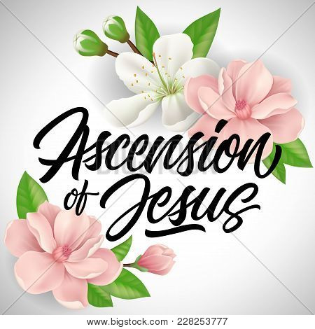 Ascension Of Jesus Lettering With Pink And White Blossoms. Calligraphic Inscription Can Be Used For