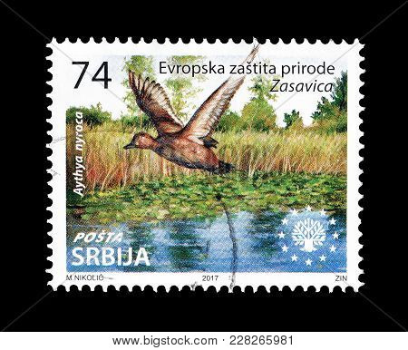 Serbia - Circa 2017 : Cancelled Postage Stamp Printed By Serbia, That Shows The Ferruginous Duck Fly