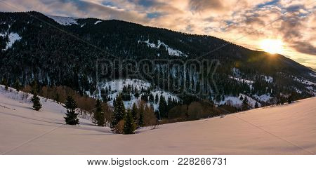 Winter Panorama In Mountains At Sunrise. Forested Hills Of Mountain Ridge And Some Trees On Snowy Sl