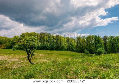 Tree On A Hump Over The Grassy Meadow Among The Forest. Beautiful Nature Scenery On A Cloudy Summer