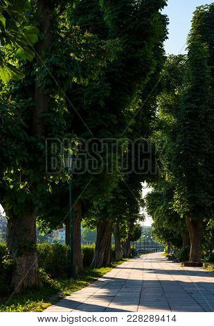 Beautiful Chestnut Alley In Summer. Lantern Among The Tall Trees On The Kyiv Embankment Of Uzhgorod