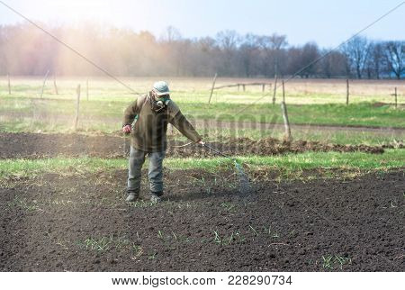 An Old Man In A Protection Mask Processes The Land In Her Vegetable Garden In Early Spring Fertilize