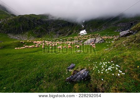 Herd Of Sheep On A Grassy Meadow. Grey Cloud Rolling In Over The Rocky Cliff Of Mountain Range. Weat