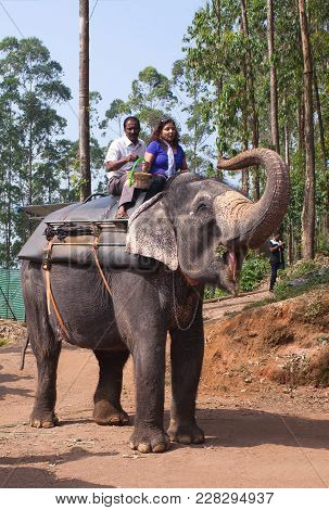 Kerala, India - November 9, 2016: Tourists On An Elefant Riding Around The Park In Munnar, Kerala St