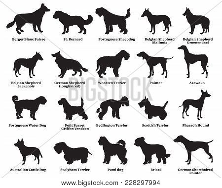 Vector Set Of Different Breeds Dogs Silhouettes Isolated In Black Color On White Background. Part 6