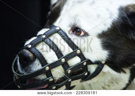 Dog Wear Leather Muzzle. Pet, Domestic Animal. Protection, Safety, Restriction Concept.