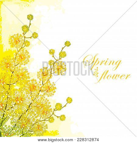 Vector Corner Bouquet Of Ornate Outline Mimosa Or Acacia Dealbata Or Silver Wattle Flower On The Pas