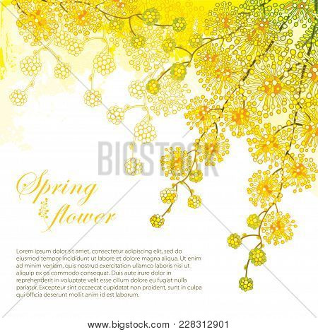Vector Corner Bouquet With Ornate Outline Mimosa Or Acacia Dealbata Or Silver Wattle Flower On The P