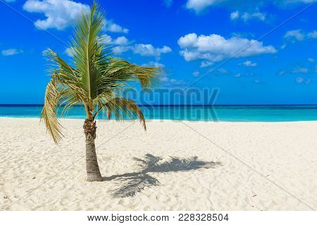 Palm Tree In The Idyllic Eagle Beach In Aruba. Caribbean Landscape.
