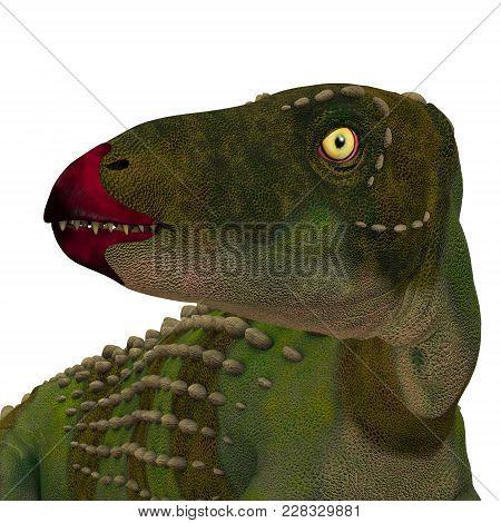 Scutellosaurus Dinosaur Head 3d Illustration - Scutellosaurus Was An Armored Herbivore Dinosaur That