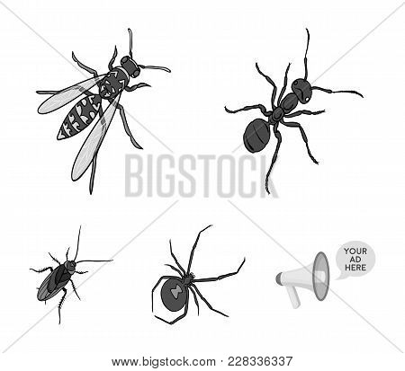 An Insect Arthropod, An Osa, A Spider, A Cockroach. Insects Set Collection Icons In Monochrome Style