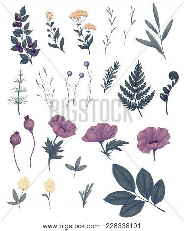 Field Flowers, Wild Plants And Herbs. Poppy Pod, Fern, Blueberry, Horsetail, Tree Branches, Foliage,