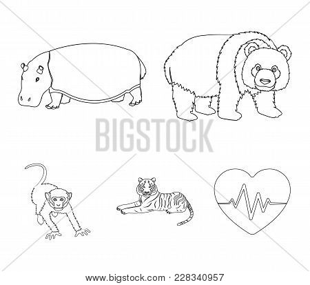 Bamboo Bear, Hippopotamus, Wild Animal Tiger, Monkey . Wild Animal Set Collection Icons In Outline S
