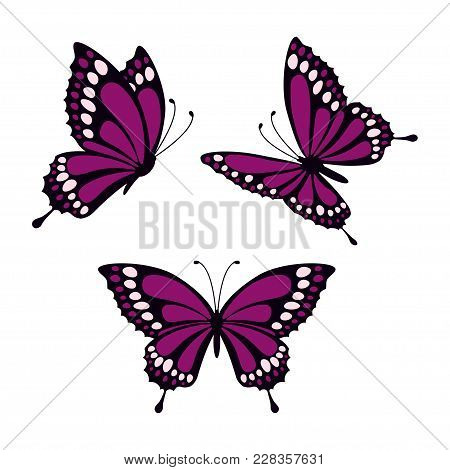 Set With Three Purple Butterflies Isolated On White Background, Butterflies In Direct, Angular And L