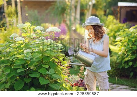 Happy Child Playing Little Gardener And Watering Hydrangea Bush In Sunny Summer Garden, Little Helpe