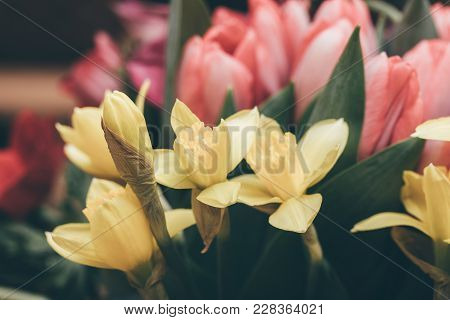 Close-up Shot Of Wonderful Blooming Narcissus Of Tender Yellow Shade.