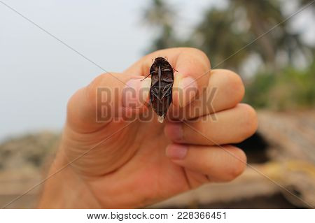 A Man Holds A Big Rap For His Fingers. The Beetle Is In His Hand.