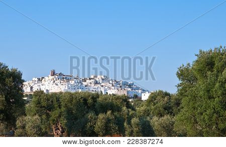 Italy,ostuni, The Whte Village Seen From The Olive Grove
