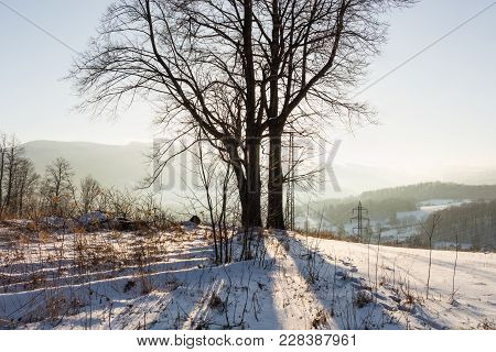 Winter Sunset Landscape With The Frosty Winter Trees And Sunlight. Winter Landscape Scene. Winter Ru