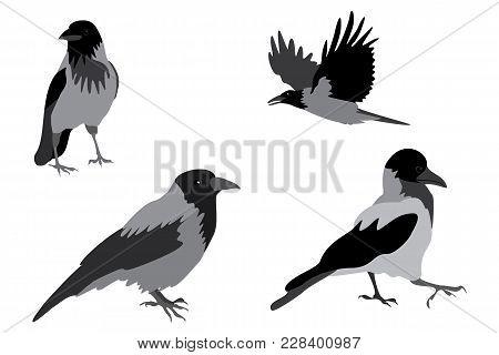 Crow Pose Wings Paws Bird Flight Black Gray Animal City Important