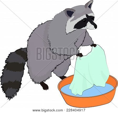 Cute Gray Raccoon Washes Clothes In In The Basin. Vector Illustration.