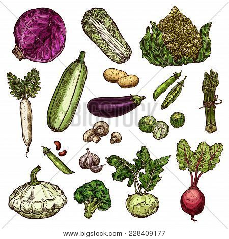 Vegetables Set Of Potato, Chinese Cabbage, Red Cabbage Or Beans, Daikon, Pea And Eggplant, Brussels,