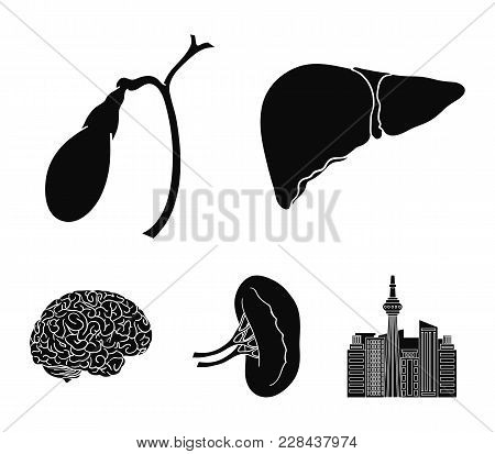 Liver, Gallbladder, Kidney, Brain. Human Organs Set Collection Icons In Black Style Vector Symbol St