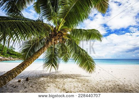 Palm Tree,white Sand,turquoise Water At Tropical Beach,paradise At Seychelles 6