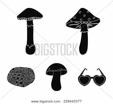 Amanita, Porcini, Black Truffle, Toadstool. Set Collection Icons In Black Style Vector Symbol Stock