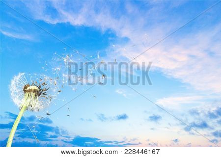 Seeds Dandelion Blow Blowing Green Vector Perspective