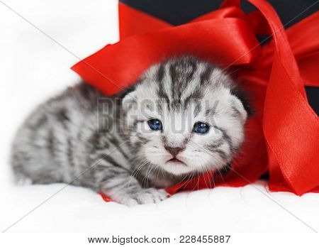 Sad Kitten Cute Kitten With A Red Bow. A Kitten With A Red Ribbon. Kitten As A Gift
