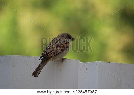 A Bird Passer Fliy, October At 5 Pm