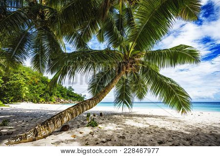 Palm Tree,white Sand,turquoise Water At Tropical Beach,paradise At Seychelles 4