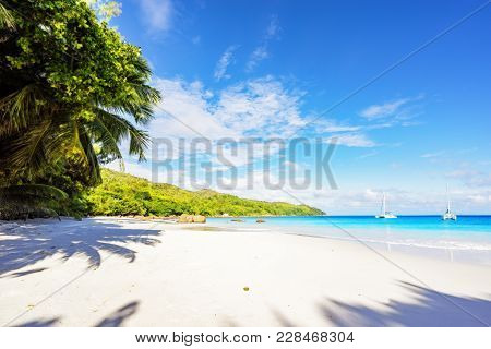Paradise Beach.white Sand,turquoise Water,palm Trees At Tropical Beach,seychelles 47