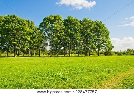 Trees On The Forest Edge On Summer